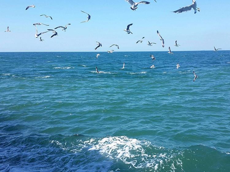 刘公岛景区_2019年蓬莱·长岛·仙境源·月牙湾·九丈崖万鸟岛蓬莱阁国际海水 ...